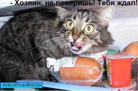 http://sh.uplds.ru/t/aETs4.jpg